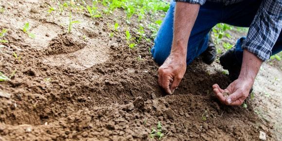 Jardinagem e Paisagismo – O jardim perfeito com os geradores de energia